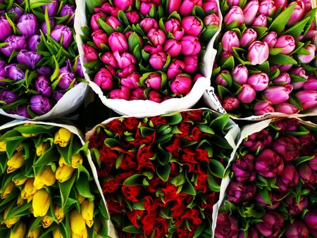 tulips of 6 variegated colors: red, purple, yellow, pink, lilac and rose in spring flower market Stock Photo