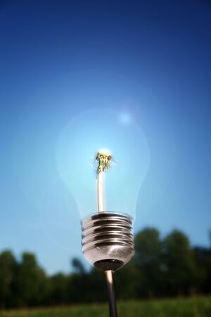ecological problem: lightbulb with dandelion in core. alternative eco energy metaphor