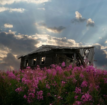 decrepitude: old shed in willowherb, sky see though roof