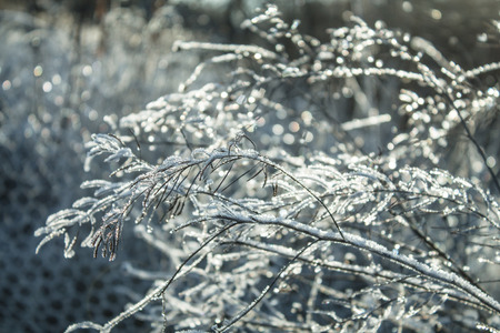 irradiation: shining frost on the twigs in bright sunshine