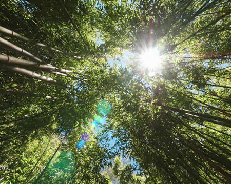 The sun is shining among the trees. The glare from the sun in the thicket of the forest Imagens