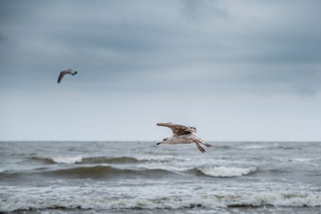 Flying seagull on the beach