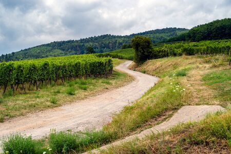 walk through the French vineyards of Alsace