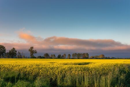 Ländliche Sicht auf das Rapsfeld Standard-Bild