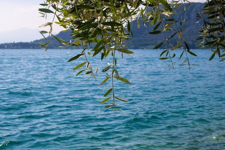 The view to Garda Lake with the olive branch and the lake with the mountains on the background - Image