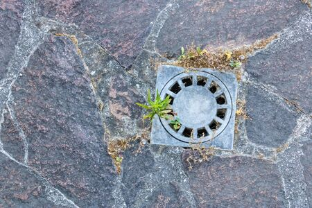 Street storm drain closeup with the  paving stones and plants growing from it - Image Imagens