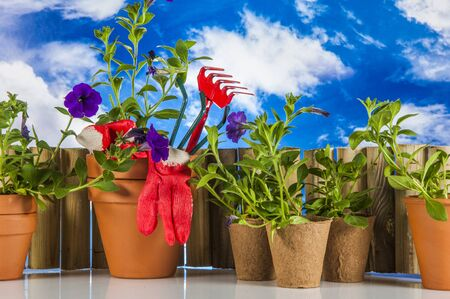 garden stuff: Garden stuff on bright blue background Stock Photo