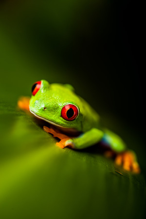 Wonderful exotic frog, tropical theme photo