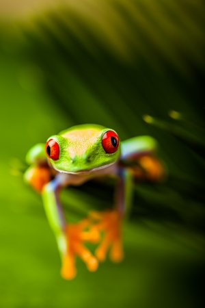 Frog on a leaf in the jungle photo