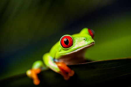 Saturated tropical concept with frog photo