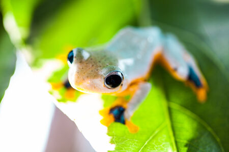 Colorful frog in tropical rain forest