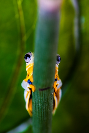 Colorful frog in the jungle photo