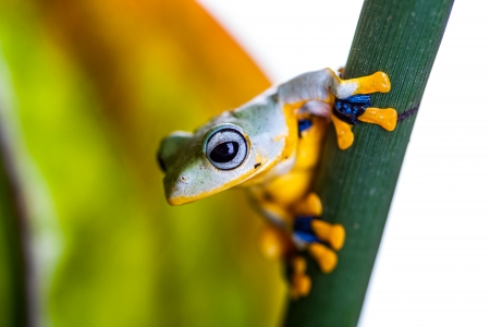 Natural environment with exotic frog Stock Photo