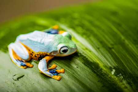 Colorful jungle theme with frog, vivid colors photo