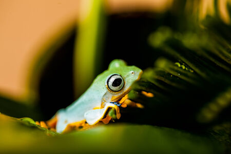 Colorful jungle theme with frog, vivid colors Stock Photo