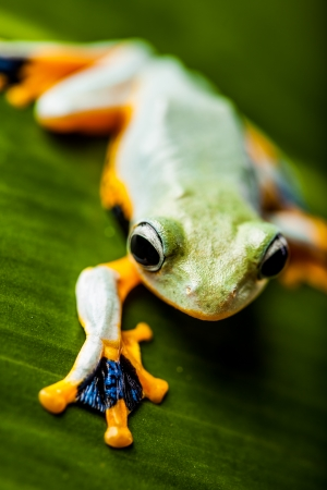 Exotic frog in the jungle