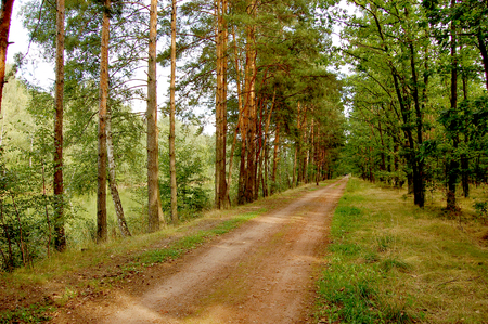 silesia: Lower Silesia forests Stock Photo
