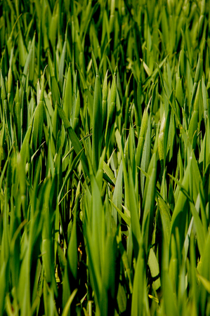 Summer time, grassland and fields Stock Photo