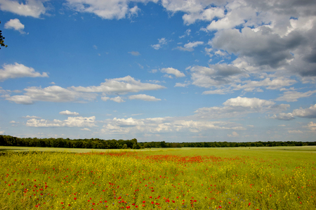 Summer time, grassland and fields photo