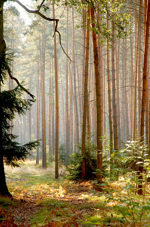 Forests of Poland photo