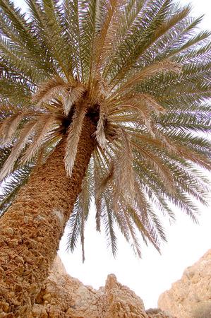 mountain oasis: Beautiful mountain oasis in Tunisia