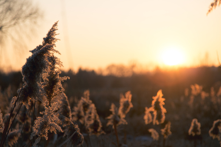 Autumn cereal and grass at sunset in warm tones Stock Photo