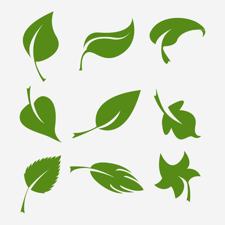 vegetate: Set of green leaves Elements for design Vector illustration