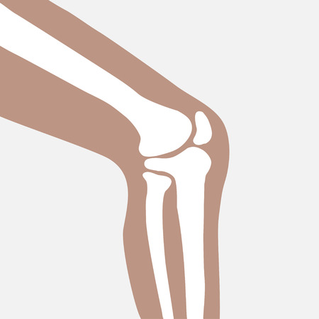 vector human knee joint side view