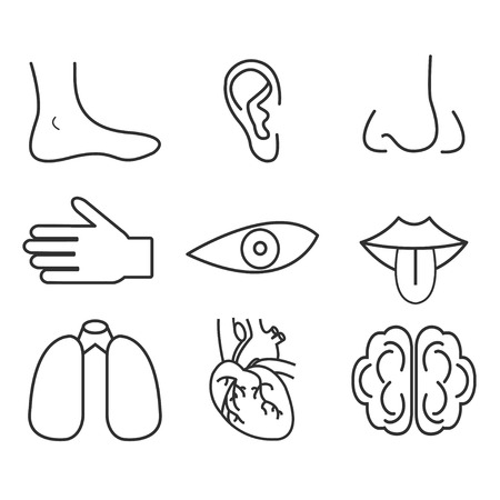 senses: Human organs senses and body parts Illustration
