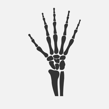 wrist hands bones Illustration