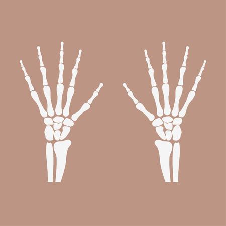 wrist hands bones Illustration