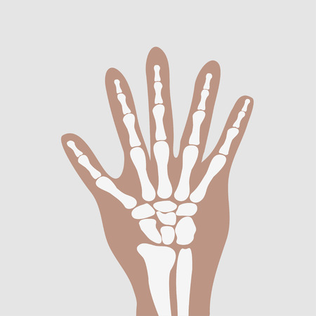 Human Wrist Hands Bones Royalty Free Cliparts Vectors And Stock
