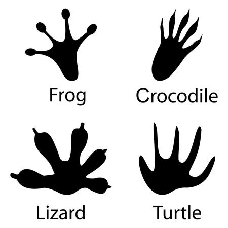 Various traces amphibians