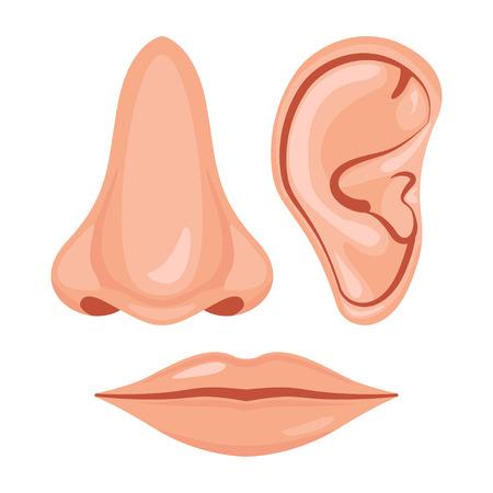 Human nose, ear, mouth, Vector illustration design icon set