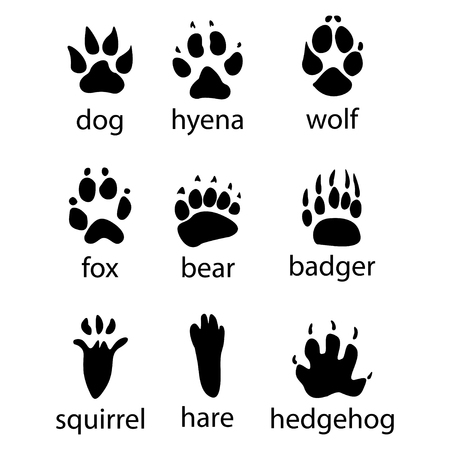 Various traces of wild animals design icon