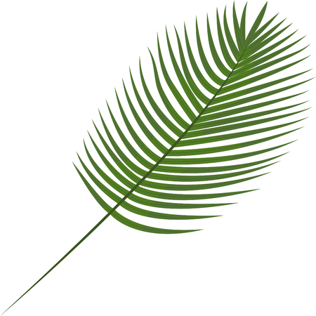 Robilini, date palm. Tropical leaves. Botanical element for cosmetics, spa, beauty care products