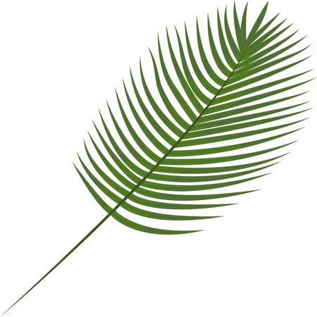 Robinini, palma da datteri. Foglie tropicali. Elemento botanico per cosmetici, spa, prodotti per la cura della bellezza