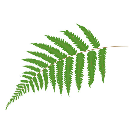 Fern. Tropical leaves. Botanical element for cosmetics, spa, beauty care products vector