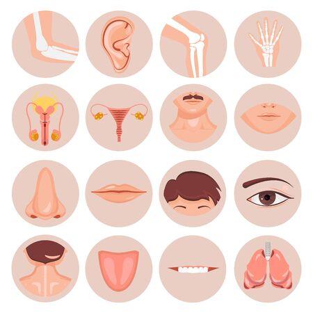 Menschliche Nase, Ohr, Mundhaare und Augenhals Rückenzunge Zahn Brust Schlüsselbein Lippen Bärte Knie Ellenbogen Handgelenksschaden Männliche weibliche Fortpflanzung anatomisches Set Vektorgrafik