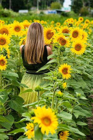 The model is back. In a field with blooming sunflowers. copy space. Standard-Bild