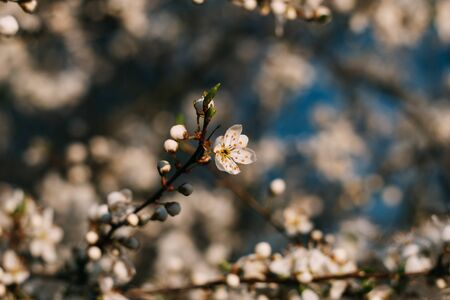 Spring flowers background. Small small flowers bloomed in spring. Soft focus. Standard-Bild