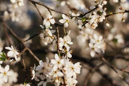 Spring flowers background. Small small flowers bloomed in spring. Soft focus. Many flowers.