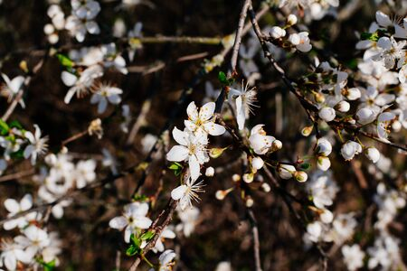 Spring flowers background. Small small flowers bloomed in spring. Sunshine