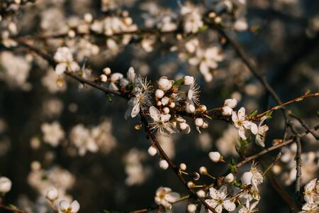 Spring flowers background. Small small flowers bloomed in spring. Warm sun.