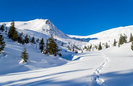Pad in de sneeuw op de berg. Bomen. Lange schaduwen. Heldere hemel, zonnig. Winter. Oekraïne