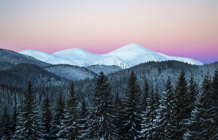 Winter morning scene of three snowy mountain peaks. Dark spruce forest in snow. Zdjęcie Seryjne