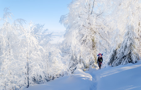 Hiking in a beautiful snowy woodland. One tourist walks out of the woods into the clearing.