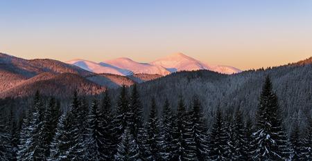 Winter scene of three snowy mountain peaks. Dark spruce forest in snow.