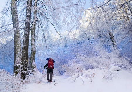 Tourist with a backpack in a blue snowy forest. Trees covered with snow.