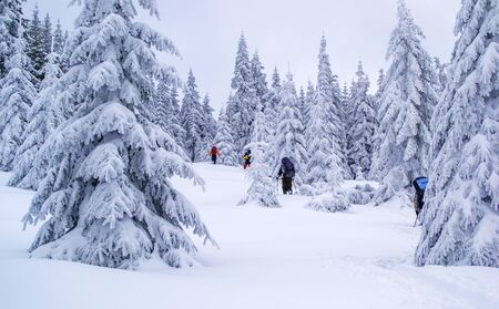 Group of tourists hikes on snow. Bad weather. Lots of snow. Zdjęcie Seryjne